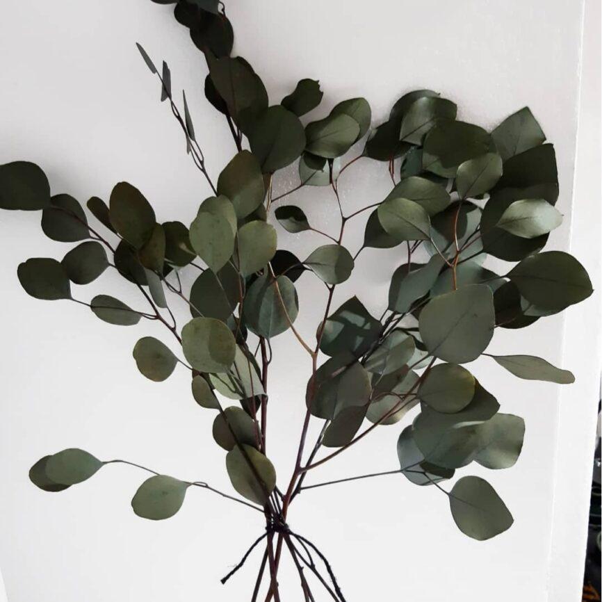Eukalyptus im Bund
