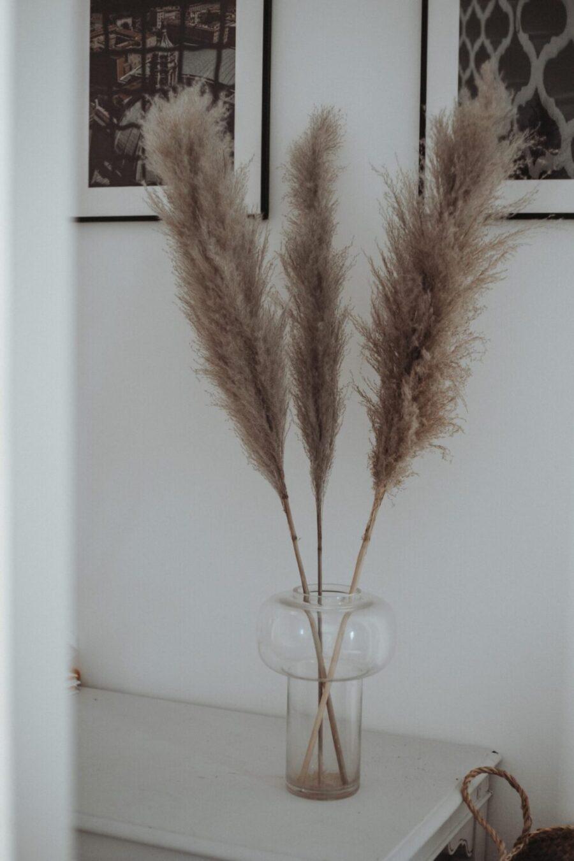 Farbe:Natur NaDeco Pampasgras getrocknet ca /±70cm 6 St/ück in Natur beige und wei/ß W/ählbar Pampas Gras Dekozweige Trockenblumen Blumenstrau/ß aus Pampasgras Dekoweige Bodenvase