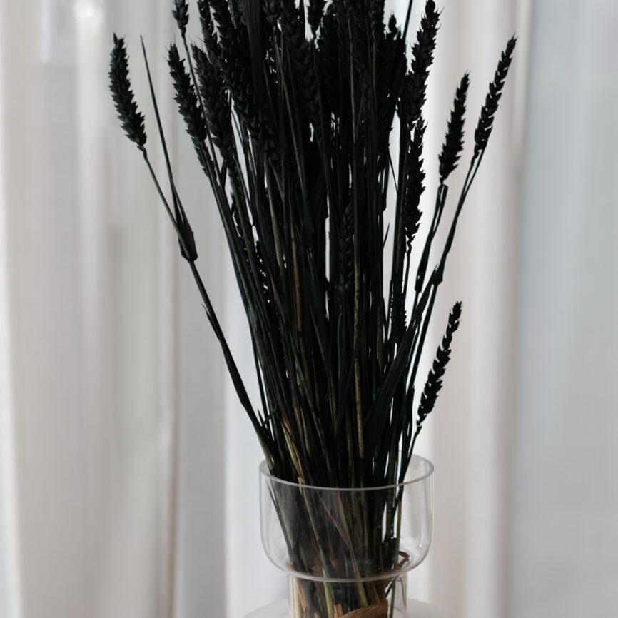 Weizen Schwarz 1 Bund