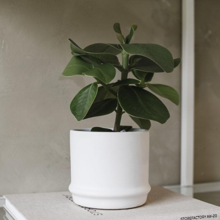 Storefactory Pflanzentopf maras weiß